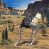 ostrich with his head in the sand Back ground desert scence